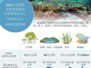 越南海洋与海岸带生态系统