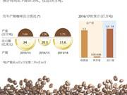 2016/17产期越南咖啡产量或将下降