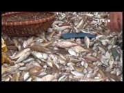 热爱大海努力保护祖国主权的越南渔民