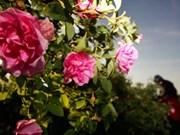 保加利亚玫瑰节首次亮相河内
