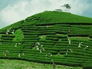 木州高原茶旅结合助推旅游升级