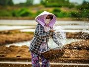 越南槟椥省海盐产业面临诸多困难