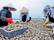 南定省蛤蜊产品满足出口欧洲的标准