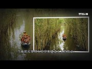 隆安省之新立水上村庄