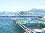 广义省居民将龙虾养殖模式转为鱼类养殖模式