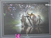 第33 届九龙江三角洲地区艺术摄影节在安江省举行