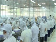 中国成越南查鱼第二大出口市场