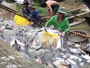 2016年金瓯省水产产量约达48万吨