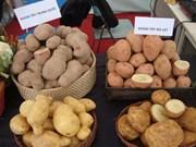 中国果蔬零关税进入越南市场