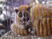 旅游企业承诺对非法销售和使用野生动植物说不