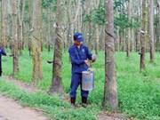 越南力推在柬埔寨的橡胶树种植项目发展