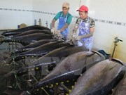 2016年越南对美国金枪鱼出口额达2亿美元