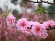 旅居加拿大多伦多越侨欢度2017年春节