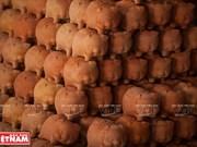 平阳省顺安县的莱眺泥猪产业