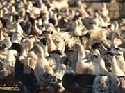 柬埔寨东部爆发H5N1禽流感疫情