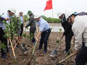 世界湿地日:越南努力做好湿地保护工作