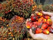 2017年印尼棕榈油出口量可达2700万吨