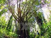 林同省出资逾5100亿多越盾 用于保护与发展生物多样性