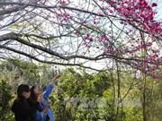 2017丁酉年春节期间赴奠边省旅游的游客量猛增