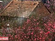 越南人过春节