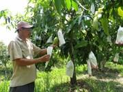 提高越南特产水果出口附加值