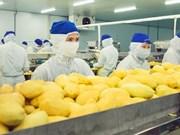 投资总额约5000亿越盾的蔬菜水果加工厂即将在西宁省动工兴建