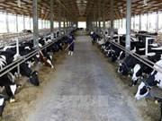 越南首家达到欧洲标准的有机奶牛养殖场正式落成