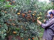 朝着大规模商品生产方向建设农业:实现庄园经济可持续发展