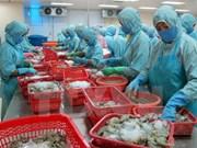 越南水产业面向提高虾出口额的目标