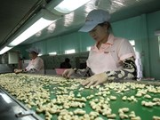 2017年前两个月越南腰果出口额下降3.3%