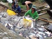 越南查鱼对中国出口猛增 喜忧并存