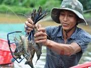 """""""越南优质水产品""""计划正式启动"""
