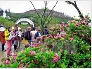 来到番西邦峰观赏杜鹃花