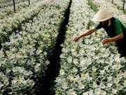 日本在林同省开展花卉种植合作项目