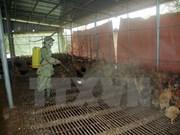 越南颁布《国家禽流感监测计划》