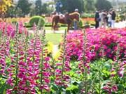 2017年大叻花卉节将于年底举行