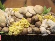 """""""越南理想""""蘑菇品牌"""