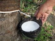 泰国、马来西亚和印尼协调联动维护橡胶价格稳定