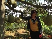 得乐省着力扩大优质水果种植面积 提高居民收入