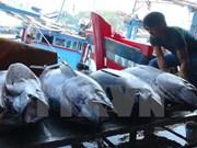 越中联合举办北部湾渔业资源增殖放流与养护活动