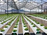 韩国在后江省寻找农业投资机会