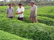 日本企业有意在越南安江省开展有机农业合作项目