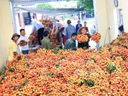 越南荔枝将销往三个新市场
