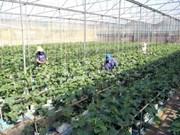 越南胡志明市力争实现集体经济增长率达10%的目标