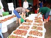中国是北江荔枝的主要出口市场