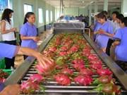 越南通过老街口岸日均对华出口600吨火龙果