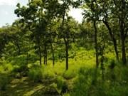 越南力争到2020年全国森林覆盖率达42%