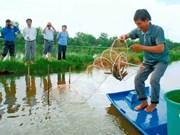 越南金瓯省投资发展五个农业支柱产业