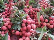越南陆岸荔枝登陆具有潜力的3个新市场