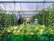 亚行:可持续农业有助于提升越南的地位